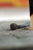 Stick of matches. Charred head on a stick of matches Stock Photos