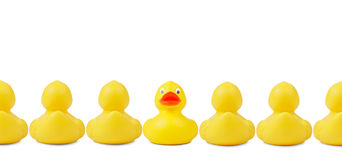 Stick Out Of The Crowd. Yellow rubber ducks in a row. An indivudalist is sticking out the crowd. Clipping path included royalty free stock photography