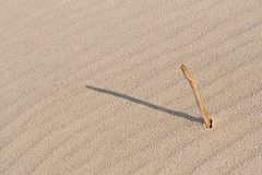 Stick in sand Stock Images