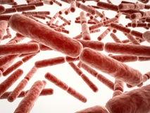 Stick shape bacteria cells. 3d rendering stick shape bacteria cells Stock Photo