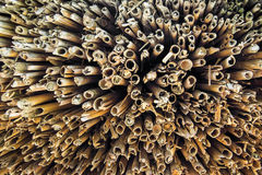 Stick Texture Stock Photography