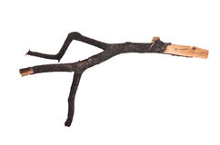 Stick or twig Royalty Free Stock Image