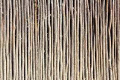 Stick white wood trunk fence tropical Mayan wall Stock Images