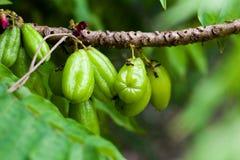 Sticka stjärnaäpplet bära frukt för sunt och vitamin C Arkivbild