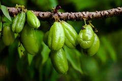 Sticka stjärnaäpplet bära frukt för sunt och vitamin C Arkivfoto
