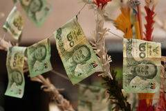 Sticked cash on merit tree. Selective focus. Stock Image