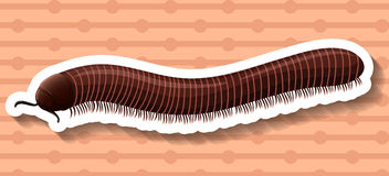 Sticker. Of a brown millipede on a brown background Stock Photography