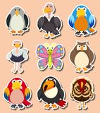 Sticker design with different kinds of birds. Illustration Stock Images
