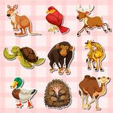 Sticker design with different types of animals. Illustration Royalty Free Stock Photos