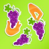 Sticker with hand holding grapes Royalty Free Stock Image