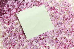 Sticker Message on Lilac Flowers Royalty Free Stock Photography