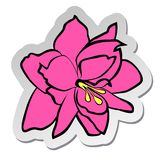 Sticker of pink Amaryllis flower in flat cartoon style isolated on white background. Vector illustration, sticker of pink Amaryllis flower in flat cartoon style vector illustration