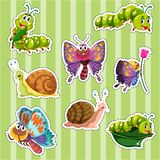 Sticker set for different types of insects. Illustration Stock Image