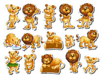 Sticker set of lion family Royalty Free Stock Images