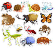 Sticker set of many insects Royalty Free Stock Image