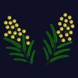 Stickereifrühling blühende Mimosenniederlassung Photorealistic Ausschnittskizze lizenzfreie abbildung