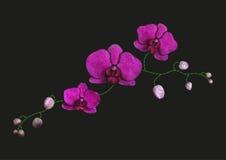 Stickereinachgemachtes Blumenmusterdesign Vector Illustrationssatinstich-Modeverzierung mit rosa Orchideenniederlassung auf Schwa Stockfoto