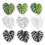 Sticker pack with monochrome and  colored  leaves of monstera and  black silhouette. Hand drawn ink sketch. Stickerpack with monochrome and  colored  leaves of vector illustration