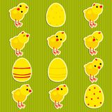 Stickers with chickens. Stickers with the chickens on a green background Stock Images