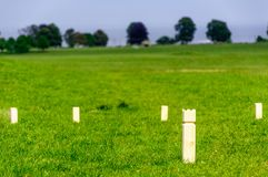 Stickey Sticks Game In Dyrehaven, Denmark Royalty Free Stock Photography
