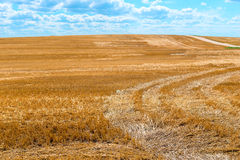 Sticking out beveled dry straw Stock Photos