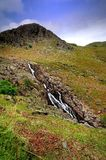 Stickle Beck Royalty Free Stock Images