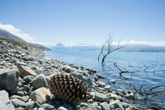Sticks and giant pine cone in calm water on stony shore of Lake Royalty Free Stock Images