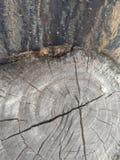 Wood stump cracks age rings tree stock images