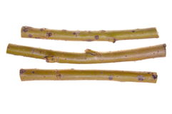 Sticks of willow Royalty Free Stock Images