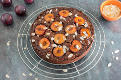 Sticky Chocolate Plum Cake on Cooling Rack Royalty Free Stock Photography