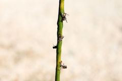 Sticky fly traps with glue Royalty Free Stock Images