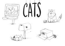 Sticky Kitties royalty free stock photos