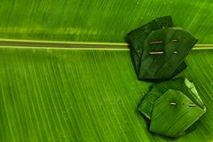 Sticky rice in banana leafe Stock Images