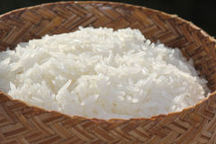 Sticky rice. In the rice box Stock Image