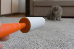 Sticky roller cleans the carpet from cat hair stock photo