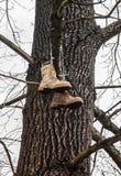 Stiefel, die am Baum hängen Stockfoto