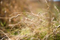 Stiel des Grases auf unscharfem Hintergrund stockfoto