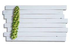 Stiel grünen Rosenkohls auf lokalisiertem Brett stockfoto