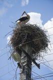 Stiel im Nest lizenzfreie stockfotografie