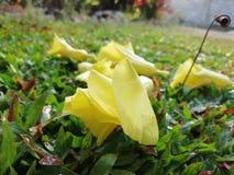 Stiel mit Blume lizenzfreie stockbilder