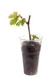 Stiel von Trauben in einem Glas lokalisiert Lizenzfreies Stockbild