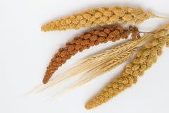 Stiel zwei des Weizens, der gelben Hirse mit zwei Zweigen und einer roten Hirse Stockfotos