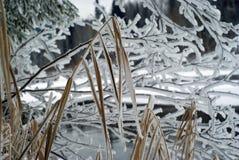 Stiele des Winters trocknen Segge gegen die eisige Winterlandschaft Stockfotografie