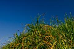 Stiele eines grünen Stocks und des Himmels Lizenzfreies Stockfoto