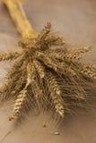 Stiele von den goldenen Weizenkörnern oben gebunden Lizenzfreie Stockbilder