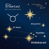 Stier 13 constellaties van de dierenriem met titels en eigennamen voor sterren Uitstekende stijl Stock Afbeeldingen