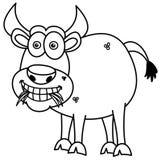 Stier, der Gras für die Färbung isst Stockbild