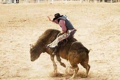 Stier die 1 berijdt Royalty-vrije Stock Afbeeldingen