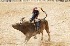 Stier die 2 berijdt Stock Foto