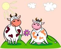 Stier en koe Royalty-vrije Stock Foto
